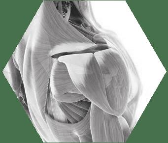 תיקון קרעים בגידי הכתפיים